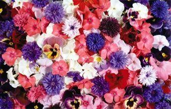 Arreglos de Flores Mixtas