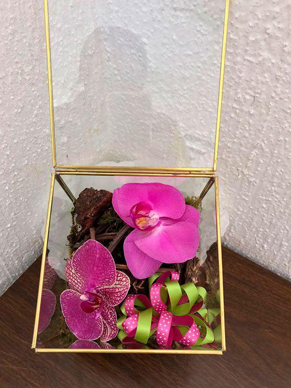 Oq 04 Caja De Cristal Especial